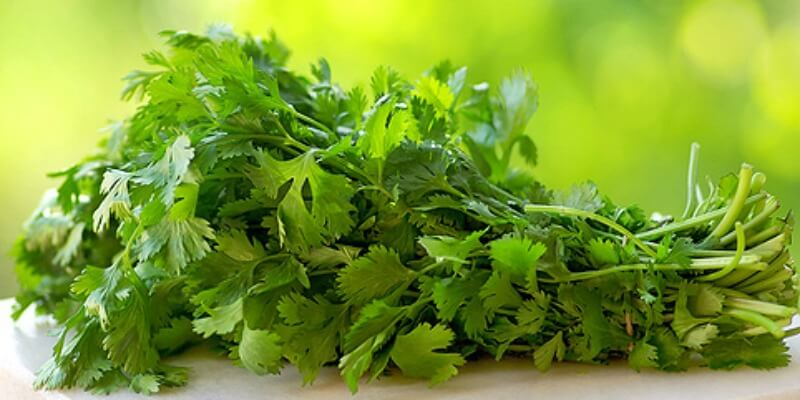 Incredible Health Benefits of Parsley